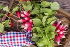Bunch of fresh radishes in a wooden box outdoors on the table Stock Photos