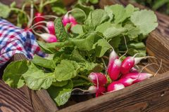 Bunch of fresh radishes in a wooden box outdoors on the table. B. Unch of fresh radishes in a wooden box outdoors on the table Stock Photo