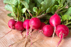 Bunch of fresh radishes on the wooden table. Fresh clean red radishes on the wooden table Stock Image