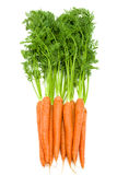 Bunch of  fresh raw carrots with green tops isolated. Bunch of fresh  carrots with green tops isolated on white Royalty Free Stock Photography