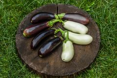 Bunch of fresh raw eggplants in grass. A bouquet of fresh raw eggplants on a blackboard in the grass Royalty Free Stock Image