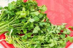A bunch of fresh raw green parsley. On a red tray Stock Photo