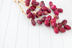 A bunch fresh raw organic dates on a branch on a white backgroun. D Royalty Free Stock Image