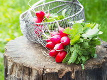 Bunch of fresh red garden radish in a basket on the stump Royalty Free Stock Photo