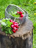 Bunch of fresh red garden radish in a basket on the stump Stock Photo