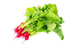 Bunch of fresh red organic radish. Studio Photo Royalty Free Stock Photos