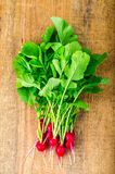 Bunch of fresh red organic radish. Studio Photo Stock Image