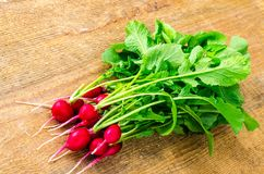 Bunch of fresh red organic radish. Studio Photo Stock Photos