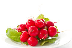 Bunch of fresh red radishes Royalty Free Stock Photography