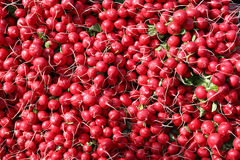 Bunch of Fresh Red Radishes. At farmers market in Mainz,Germany Stock Photography