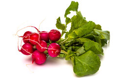 Bunch of fresh red radishes with green tops Stock Image
