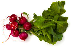 Bunch of fresh red radishes with green tops Stock Photography
