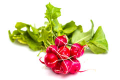 Bunch of fresh red radishes with green tops Royalty Free Stock Photography
