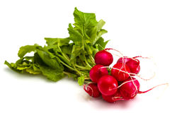Bunch of fresh red radishes with green tops Royalty Free Stock Photo
