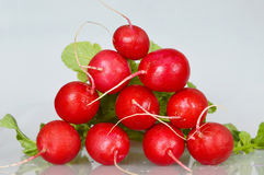 Bunch of fresh red radishes Royalty Free Stock Photo