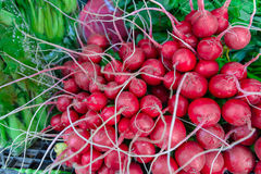 Bunch of fresh red radishes in market. Royalty Free Stock Photos