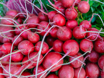 Bunch of fresh red radishes in market. Stock Images
