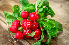 Bunch of fresh red radishes Royalty Free Stock Image