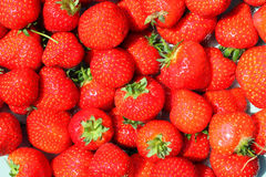 Bunch of fresh red strawberries. Royalty Free Stock Image