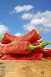 Bunch of fresh red sweet peppers (capsicum) Royalty Free Stock Images