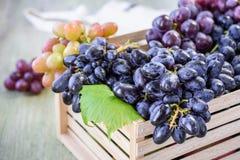 Ripe grapes. royalty free stock photos