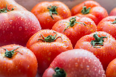 A bunch of fresh ripe tomatoes in droplets of water Stock Image