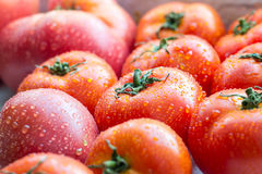 A bunch of fresh ripe tomatoes in droplets of water Stock Photography