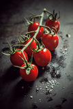 Bunch of fresh ripe tomatoes on the vine Stock Photos