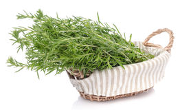 Bunch of fresh rosemary in a basket Royalty Free Stock Photos