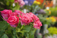 Bunch of fresh roses at flower shop Stock Photo