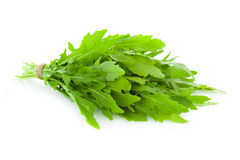 Bunch of fresh Ruccola  leaves /  rocket salad  /  isolated on w Royalty Free Stock Photos