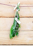 Bunch of fresh sage Stock Photography