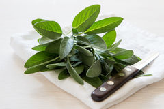 A bunch of fresh sage on light wooden table. Selective focus Royalty Free Stock Photo