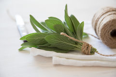 A bunch of fresh sage on light wooden table. Selective focus Royalty Free Stock Images