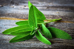 A bunch of fresh sage Stock Photography