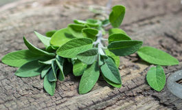 A bunch of fresh sage on an  wooden table Royalty Free Stock Image