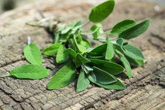 A bunch of fresh sage on  wooden table Royalty Free Stock Photos