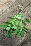 A bunch of fresh sage on  wooden table Stock Photos
