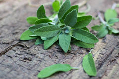 A bunch of fresh sage on  wooden table Royalty Free Stock Photo