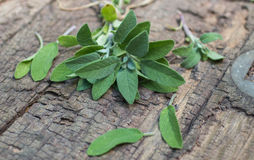 A bunch of fresh sage on an  wooden table Stock Photography