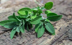 A bunch of fresh sage on an  wooden table Stock Images