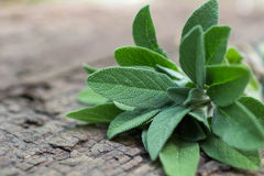 A bunch of fresh sage on an  wooden table Royalty Free Stock Photography