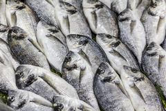 Fresh Sea Bream dorada on ice background. Fish for sale at the market. A bunch of fresh Sea Bream dorada in a fish shop royalty free stock photos