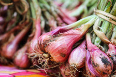 Bunch of fresh shallots.Asia red onion. Benefits of shallot, Hel. Ps to increase energy and boosts blood circulation in body Royalty Free Stock Photography