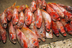 Bunch of fresh snapper on the market. Coast, Ecuador Royalty Free Stock Image