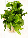 A bunch of fresh sorrel in a bowl wicker basket on white wooden. A bunch of fresh tasty sorrel in a bowl wicker basket on white wooden background Royalty Free Stock Photos