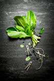 Bunch of fresh sorrel with clothespins. On the black wooden table Royalty Free Stock Images