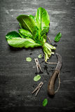 Bunch of fresh sorrel with clothespins. On the black wooden table Royalty Free Stock Photos
