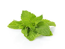 Bunch of fresh spearmint isolated on white Royalty Free Stock Photography