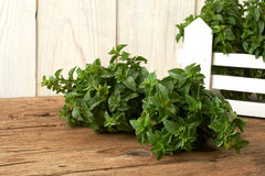 Bunch of fresh spearmint on wooden bench Stock Image